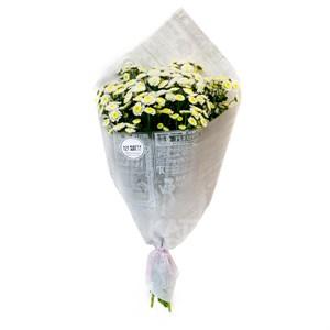 Букет хризантема кустовая (7шт)